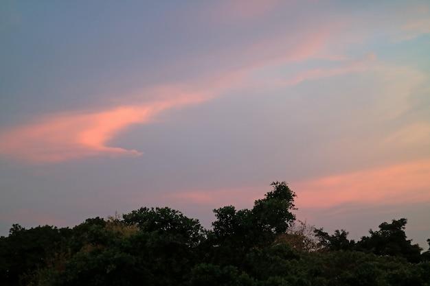 Pastel bleu et rose du ciel coucher de soleil tropical sur la silhouette des arbres à bangkok, thaïlande