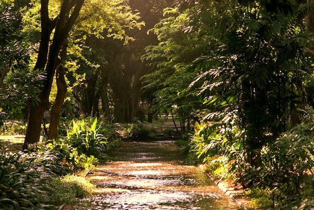 Patch à travers une forêt verte