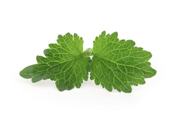 Patchouli ou pogostemon cablin benth feuille verte isolée sur blanc avec un tracé de détourage.