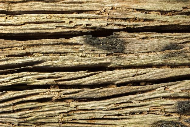Patiné fissuré d'écorce vieillie et passerelle de termites sur le tronc.