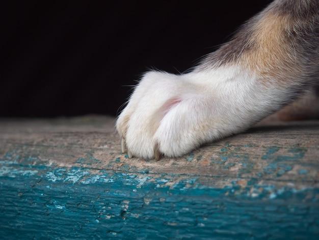 Patte de chat avec gros plan de griffe.