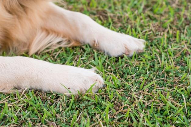 Pattes de chien dans l'herbe verte.