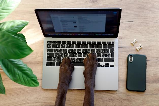 Pattes de chien tapant sur un document ou une note de clavier d'ordinateur portable, bureau à domicile pour les personnes et les animaux, travail en ligne à domicile