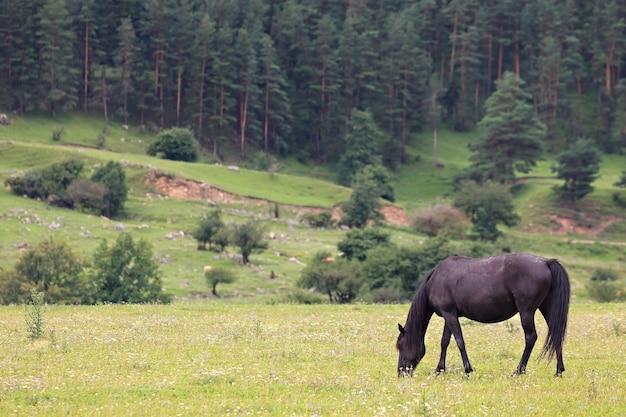 Pâturage alpin en forêt pour chevaux