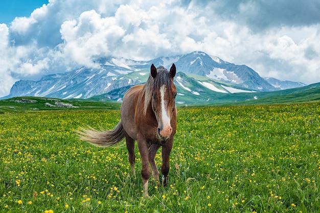 Le pâturage des chevaux dans la vallée de montagne, laganaki, russie