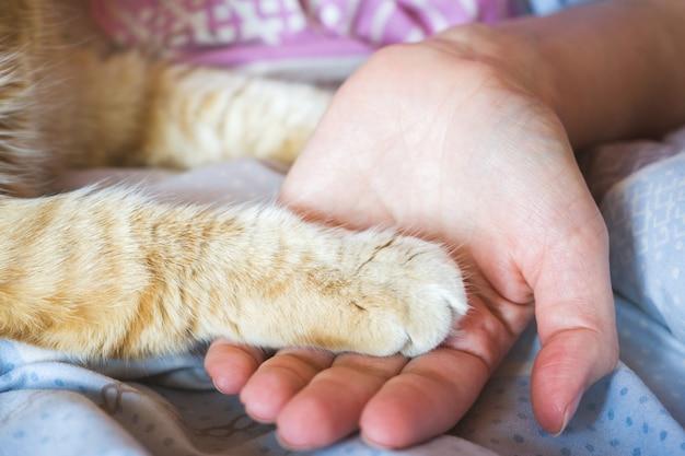La paume de la femme tient la patte du chat rouge.