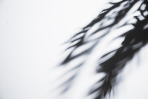 Paume tremblante feuilles ombre sur fond blanc