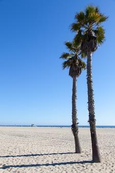 Paumes sur la plage de santa monica - los angeles - pendant une journée ensoleillée avec un ciel bleu parfait
