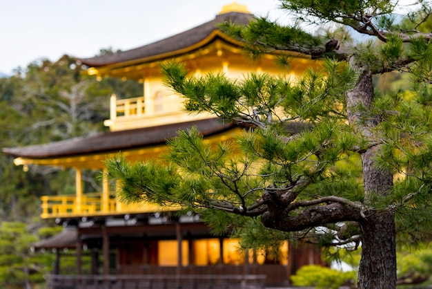 Pavillon d'or, temple kinkakuji à kyoto au japon