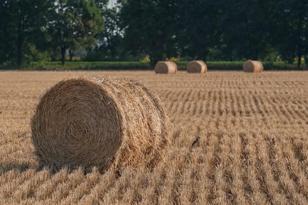 Paysage agricole avec des meules de foin sur terrain, rouleaux de blé en pente, vue sur l'agriculture