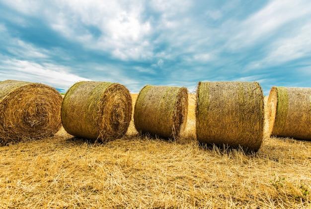 Paysage de l'agriculture de hay bales