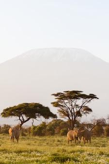 Paysage avec des animaux au kenya
