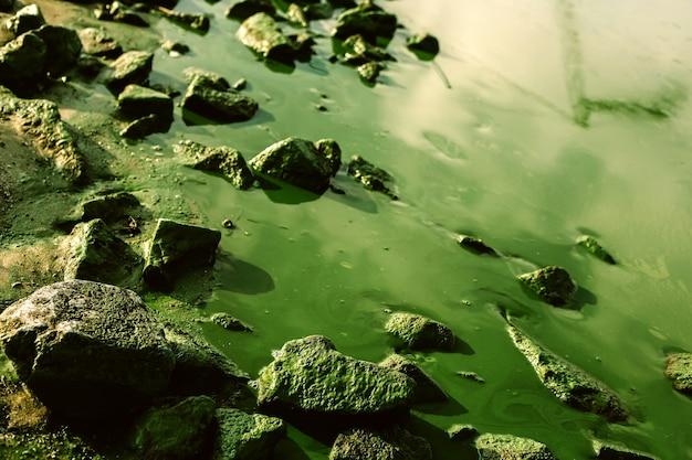 Paysage aquatique avec des fleurs d'algues nuisibles et des pierres colorées moussues, fond naturel