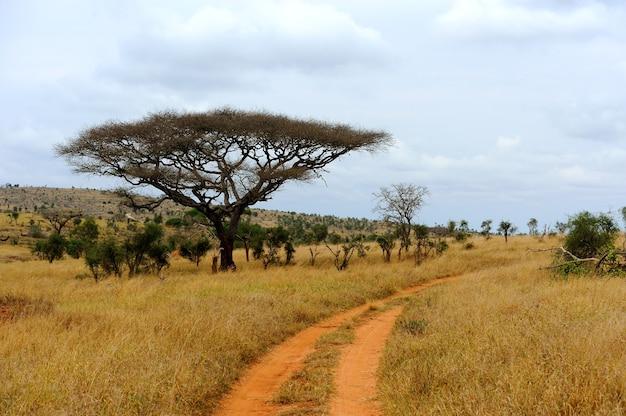 Paysage avec arbre en afrique