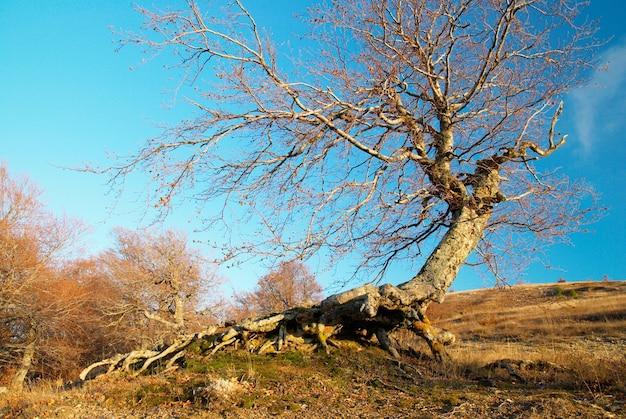 Paysage avec arbre et ciel bleu.