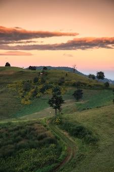 Paysage d'arbre sur la colline verte avec un ciel coloré dans la soirée au parc national