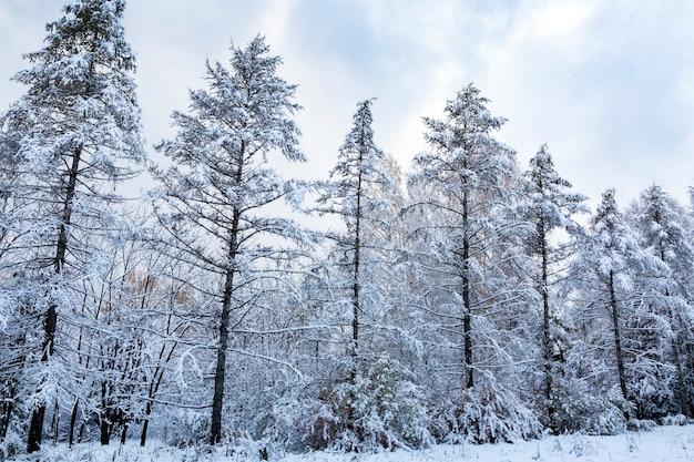 Paysage avec des arbres couverts de neige. météo, climat, changement de saisons.