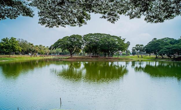 Paysage arbres reflet de l'eau verte lac étang plan d'eau miroir ciel clair nuages jungle bois verdure nature environnement paix.lac ou étang rive et arbres