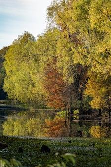 Paysage d'arbres reflet sur un lac entouré de verdure et de bois en automne