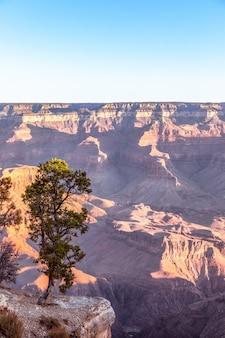 Paysage avec des arbres solitaires sur une falaise contre du grand canyon dans les rayons du soleil levant