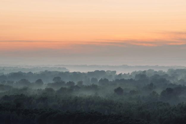 Paysage atmosphérique avec forêt dans le brouillard au lever du soleil