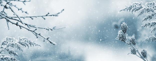 Paysage atmosphérique d'hiver avec des plantes sèches couvertes de givre pendant les chutes de neige. fond de noël d'hiver
