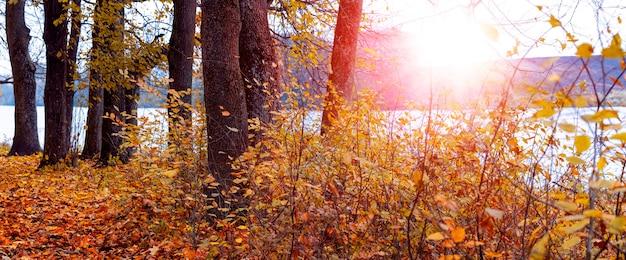 Paysage d'automne avec des arbres au bord de la rivière pendant le coucher du soleil, panorama