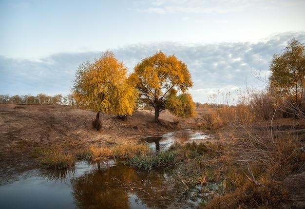 Paysage d'automne avec des arbres jaunes au bord de la crique