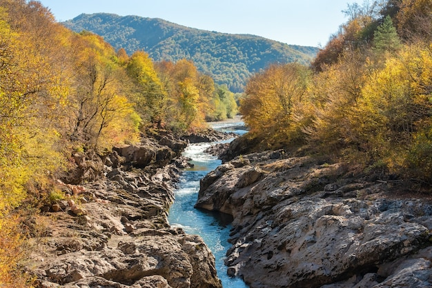 Paysage d'automne, arbres jaunes, chaîne de montagnes l'après-midi.