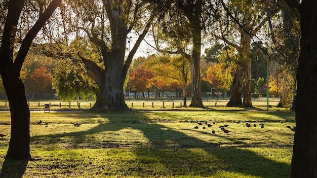 Paysage d'automne avec des arbres, des oiseaux mangeant dans l'herbe et la lumière du soleil filtrant à travers