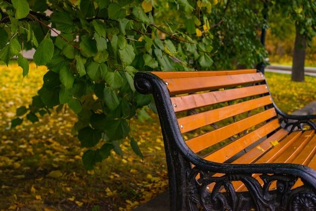 Paysage d'automne avec un banc d'arbres et des feuilles qui tombent