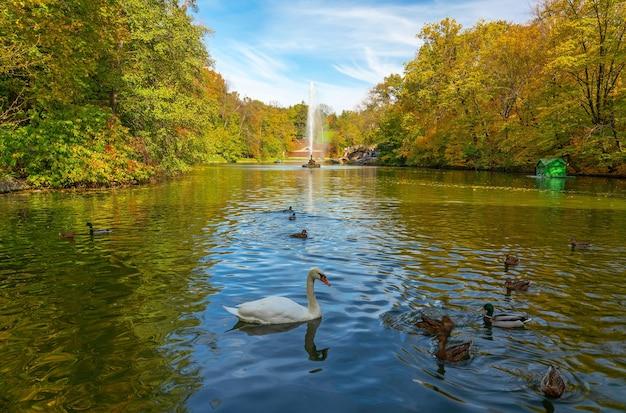 Paysage d'automne avec cygne et canards sur le lac, fontaine et arbres jaunes, parc sofiyivsky, uman, ukraine.