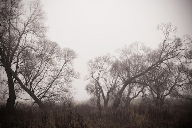 Paysage d'automne dans le brouillard