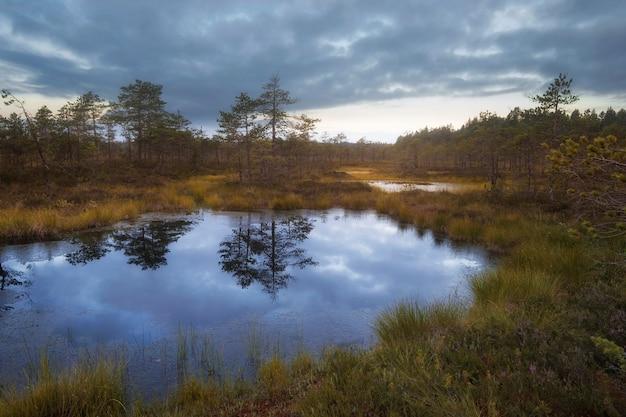 Paysage d'automne dans un marais du nord avec un ciel sombre dans la réserve naturelle boloto ozernoe dans la région de leningrad en russie