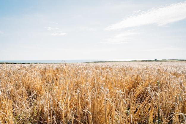 Paysage d'automne avec de l'herbe jaune et de beaux nuages