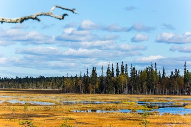 Paysage d'automne à muonio, laponie, finlande du nord