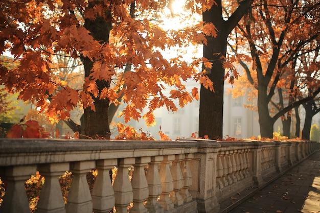 Paysage d'automne - parc municipal d'automne avec des feuilles mortes et des arbres d'automne