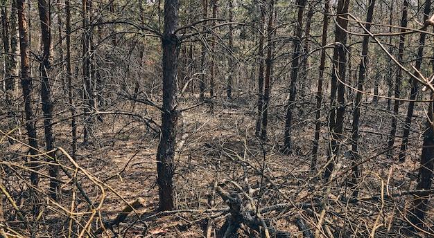 Paysage d'automne. photo de la zone boisée pleine de vieux arbres et de branches cassées tombées
