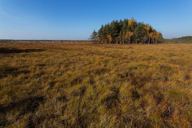 Paysage d'automne pittoresque avec la tourbière et l'oasis de pins.