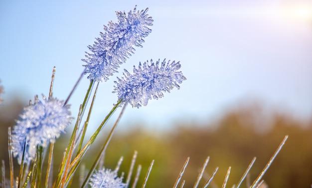 Paysage d'automne. les plantes sont couvertes de givre et de glace.