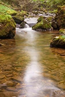 Paysage d'automne d'une rivière de montagne brumeuse qui traverse la forêt verte