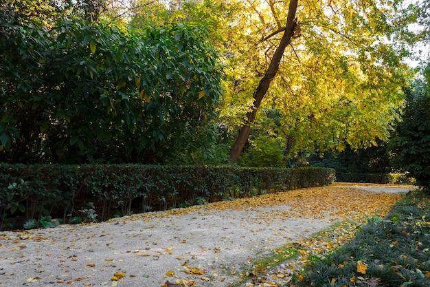Paysage d'automne avec route