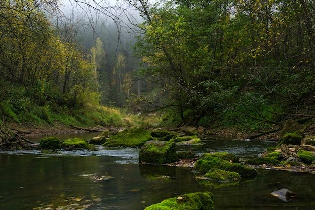 Paysage d'automne - un ruisseau dans une forêt brumeuse creuse avec des rochers moussus