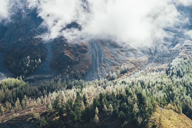 Paysage d'automne vertige coloré avec forêt de conifères avec givre sur les arbres sur la colline moussue sous les nuages bas. vue panoramique sur de beaux mélèzes jaunes avec givre et montagne rocheuse dans les nuages.