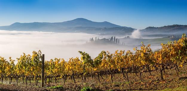 Paysage d'automne avec des vignes lumineuses et du brouillard