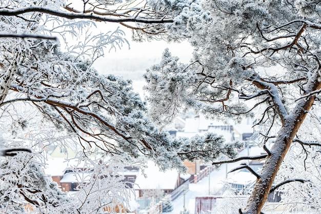 Paysage d'un beau petit village de maisons en bois à travers des branches de pins couvertes de neige