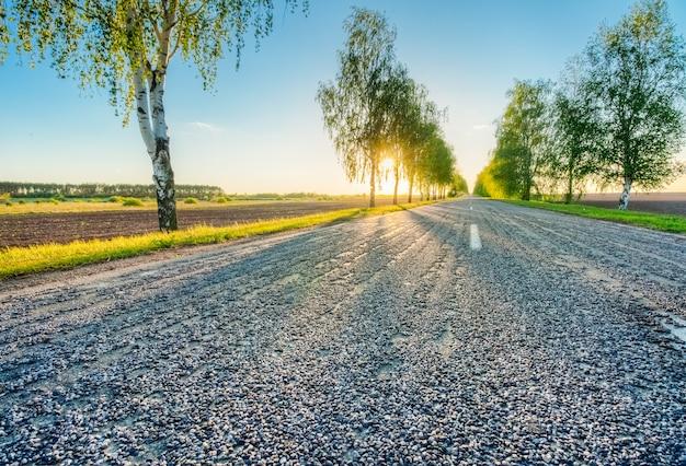 Paysage avec des bouleaux au bord de la route