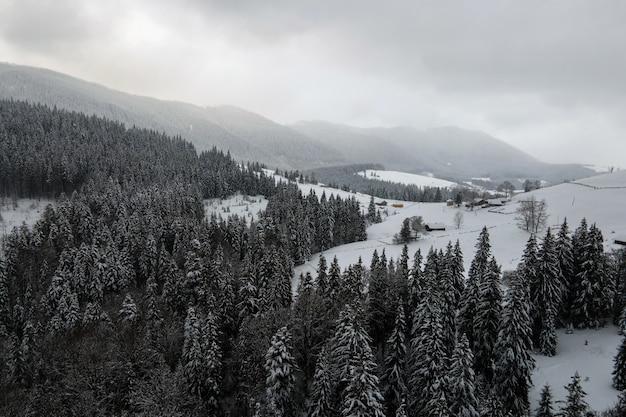 Paysage brumeux aérien avec des pins à feuilles persistantes recouverts de neige fraîche tombée après de fortes chutes de neige dans la forêt de montagne d'hiver par une soirée froide et calme.