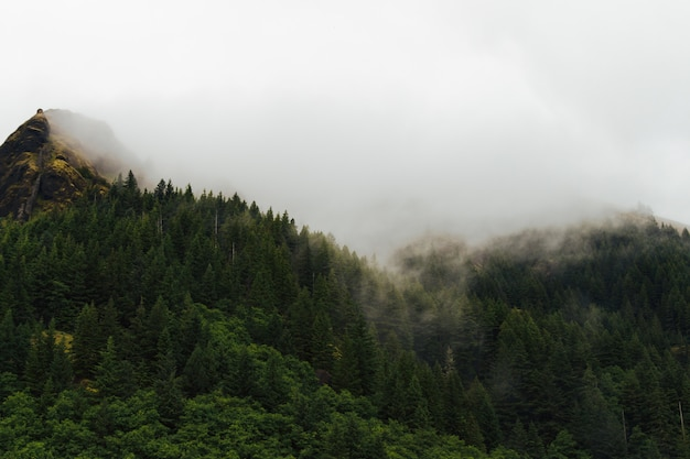 Paysage brumeux d'une forêt avec de la fumée sortant des arbres