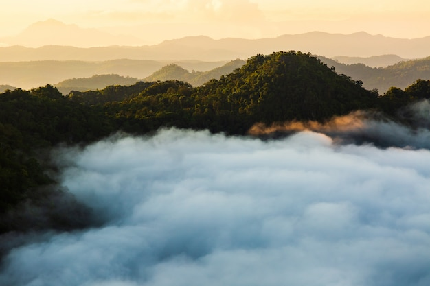 Paysage brumeux avec forêt de sapins